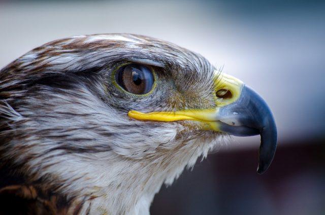 soigneur animalier spécialisée en oiseaux