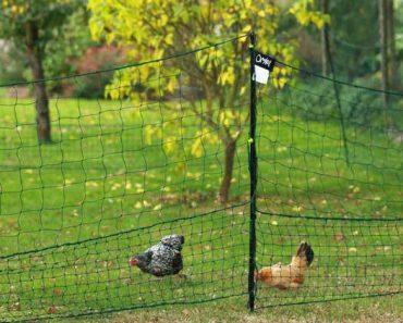 enclos filet poules